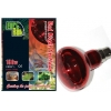 Red Night 150w Spotlamp Bayonet