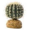 Exo Terra Desert Plant- Barrel Cactus Small