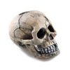 "Classic Spooky Skull 4"""