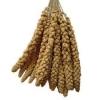 Millet Sprays Loose 15kg